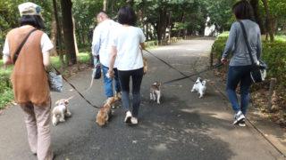 お散歩練習会 🐾